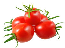 Lush tomatoes . Isolated Royalty Free Stock Photo