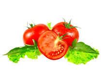 Lush tomatos. With green leafs. Isolated over white Royalty Free Stock Photos