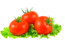 Lush tomatos with green leafs. Isolated Royalty Free Stock Images