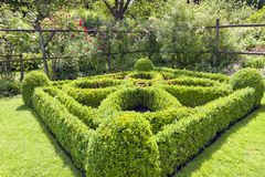 Lush Topiary Square on a country garden Stock Photography