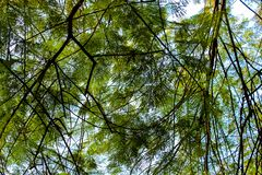 A lush tree branches. In a park royalty free stock image