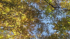 Lush tree crown against the blue sky stock footage
