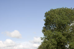 Lush tree growing in the wild Stock Images