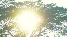 Lush tree and sun. Branches and green foliage stock video