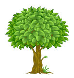 Lush tree Stock Image