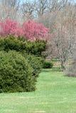 Lush trees and bushes Royalty Free Stock Image