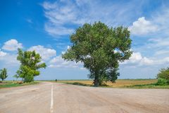 Lush trees at crossroads. Against blue sky with white clouds stock photos
