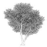 Lush trees Stock Photography