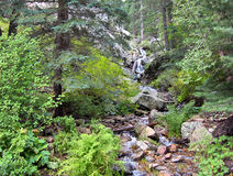 Lush trees and plants line the mountainside stream of Mt Graham Royalty Free Stock Photo