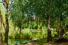 Lush trees reflected in a pond Stock Photography