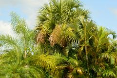 Lush Tropical Background Stock Photography
