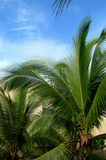 Lush tropical foliage Royalty Free Stock Photos
