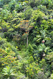 Lush tropical foliage Royalty Free Stock Photos