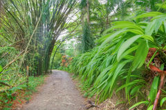 Lush tropical forest Royalty Free Stock Photos