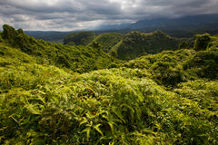 Lush tropical forest, storm clouds stock images