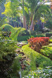 Lush tropical garden in Bangalore. Lush tropical garden  showing green vegetation, palm trees and stream Royalty Free Stock Photography