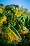 Lush Tropical Garden in Los Angeles California stock images
