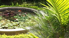 Lush tropical garden with lotus pond stock video