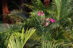 Lush tropical garden. With blooming flowers and palm leaves on the sunny day royalty free stock photos