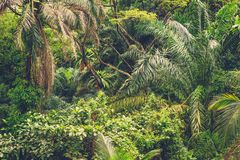 Lush tropical green jungle Royalty Free Stock Images