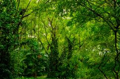Lush tropical green jungle Royalty Free Stock Photos
