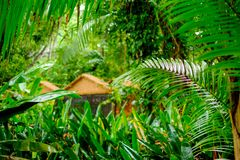 Lush tropical green jungle Stock Image