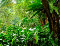 Lush tropical green jungle Royalty Free Stock Photo