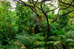 Lush tropical green jungle Stock Photos