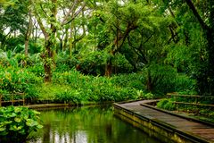 Lush tropical green jungle Royalty Free Stock Photography