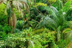 Lush tropical green jungle Royalty Free Stock Image