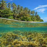 Lush tropical island with coral reef underwater Stock Photos