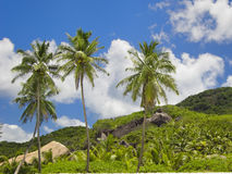 Lush tropical landscape with palm trees. Unspoiled tropical view above Grand Anse beach, La Digue island, Seychelles royalty free stock image