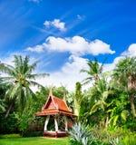 Lush tropical plants. Exotic garden. lush tropical plants Royalty Free Stock Photos
