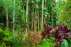 Lush tropical rain forest stock image
