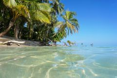 Lush tropical shore and sea surface Stock Images