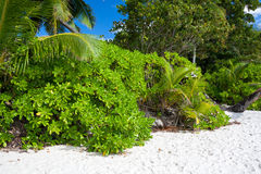 Lush Tropical Vegetation on the Beach Royalty Free Stock Image