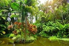 Lush tropical vegetation of the Hawaii Tropical Botanical Garden of Big Island of Hawaii. USA Royalty Free Stock Photo