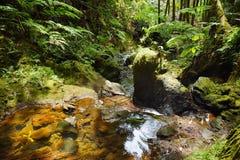Lush tropical vegetation of the Hawaii Tropical Botanical Garden of Big Island of Hawaii. USA Stock Images