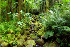 Lush tropical vegetation of the Hawaii Tropical Botanical Garden of Big Island of Hawaii Stock Photography