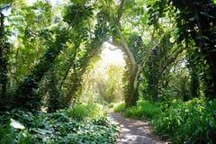 Lush tropical vegetation of the islands of Hawaii. USA Royalty Free Stock Photo