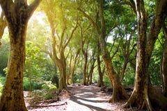 Lush tropical vegetation of the islands of Hawaii. USA Stock Photo