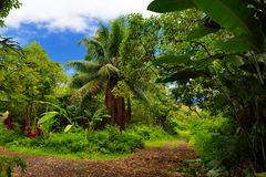 Lush tropical vegetation of the islands of Hawaii Stock Photos