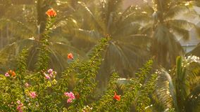 Lush tropical vegetation in sunlight. View of green blooming flowers and palm trees in bright golden sunlight.  stock footage