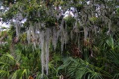 Big Talbot Island State Park, Florida, USA. Lush tropical woods with abundant Spanish moss draping branches of live oak trees at Big Talbot Island State Park stock photos