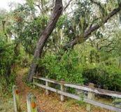 Lush tropical woods with abundant Spanish moss draping branches of live oak trees, Big Talbot Island State Park, Florida, USA. Lush tropical woods with abundant stock image