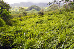 Lush Valley Kauai Hawaii Royalty Free Stock Image