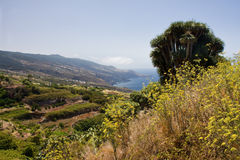 Lush vegetation at coast of La Palma Stock Photos