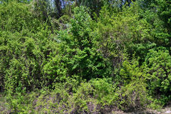 Lush vegetation in the Danube meadow 2. On the lower Danube there are many secondary canals that conserve wild flora and fauna Stock Image