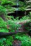 Starved Rock State Park. Lush vegetation grows near a small waterfall at Starved Rock State Park Stock Photos