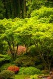 Lush vegetation, Japanese garden Royalty Free Stock Photo